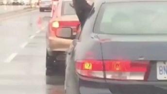 Cachorro Com A Cabeça Para O Lado De Fora Do Carro E 'Comendo' A Chuva!