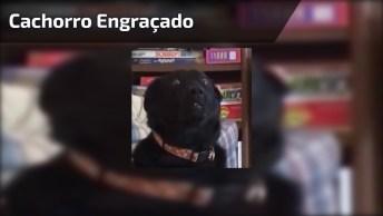 Cachorro Com A Cara Mais Engraçada Que Você Já Viu Na Vida, Hahaha!