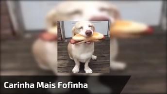 Cachorro Com A Carinha Mais Fofa Que Se Possa Imaginar, Impossível Não Ama-Los!