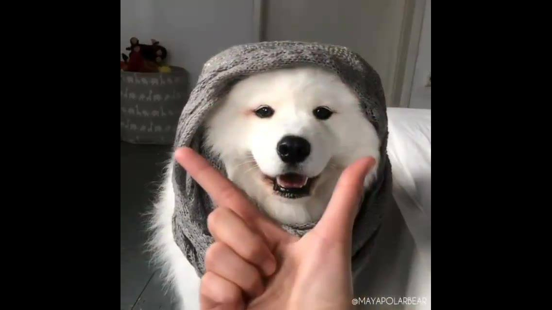 Cachorro com a carinha mais linda que você vai ver hoje