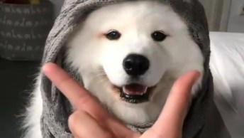 Cachorro Com A Carinha Mais Linda Que Você Vai Ver Hoje, Encantador!