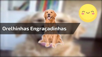 Cachorro Com As Orelhinhas Mais Engraçadinhas Que Você Vai Ver Hoje!