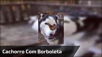 Cachorro Com Borboleta Na Cabeça, A Carinha Dele É Sensacional!