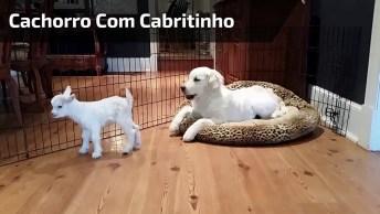Cachorro Com Cabritinho, Olha Só Que Coisinha Mais Fofinha!