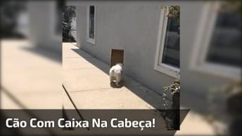 Cachorro Com Caixa Na Cabeça, Ele Parece Estar Perdido, Confira!