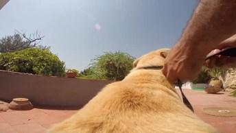 Cachorro Com Câmera Para Filmar Sua Trajetória, Veja Como Foi!