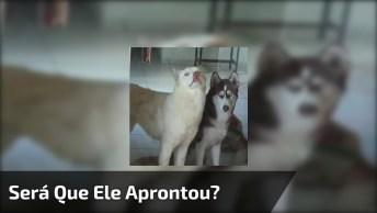 Cachorro Com Cara De Assustado, O Que Será Que Ele Aprontou Hahaha!