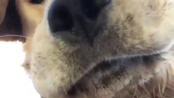 Cachorro Com Cara De Invocado, Esse É Uma Figura, Confira!