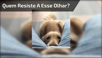 Cachorro Com Cara De Pena, Quem Resiste A Um Olhar Desse?