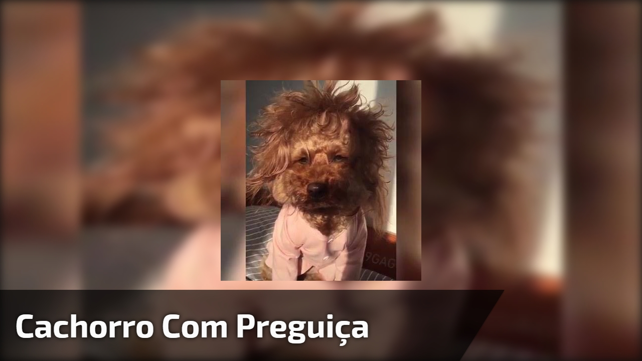 Cachorro com preguiça