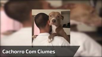 Cachorro Com Ciumes Do Irmão, Que Belezinha Ele Chamando A Atenção!