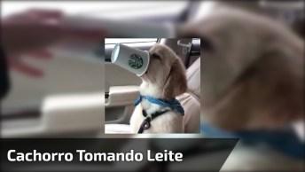 Cachorro Com Copo Na Boca E Nariz, Tomando Café Reforçado!