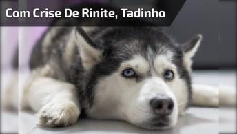 Cachorro Com Crise De Rinite, O Coitado Não Consegue Parar De Espirrar!