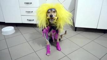 Cachorro Com Estilo Roqueiro, Tem Para Todos Os Gostos Hahaha!