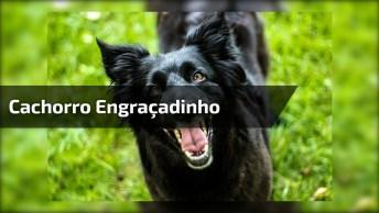 Cachorro Com Expressão Mais Engraçada Que Você Já Viu Na Vida, Hahaha!