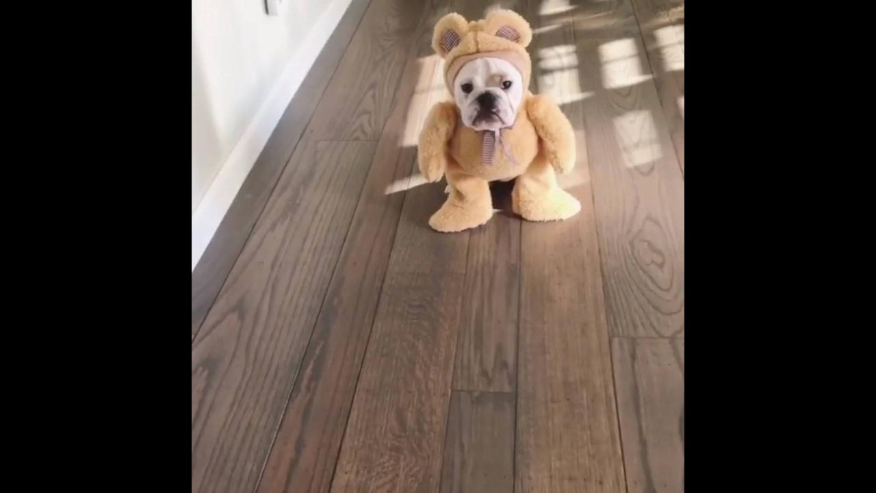 Cachorro com fantasia de ursinho