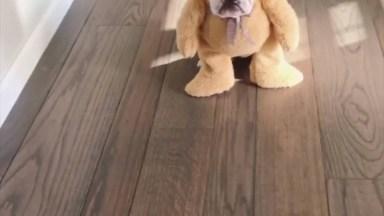 Cachorro Com Fantasia De Ursinho, Tem Uma Cena Mais Fofa Que Essa?