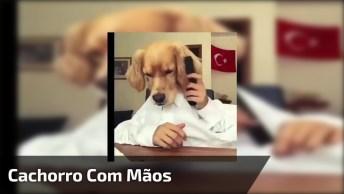 Cachorro Com Mão De Humano, A Melhor Montagem Do Dia, Confira!