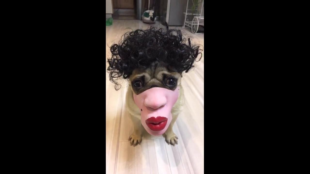 Cachorro com máscara engraçada