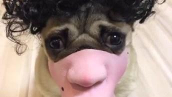 Cachorro Com Máscara Engraçada, Você Vai Rir Muito Da Carinha Dele!