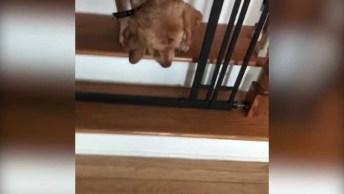 Cachorro Com Medo De Descer Escada, Olha Só A Carinha Dele!