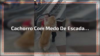 Cachorro Com Medo De Subir Escada Rolante, Veja O Que Seu Dono Faz!