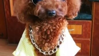 Cachorro Com Muito Estilo - Você Vai Se Apaixonar Nesse Cão Charmoso!