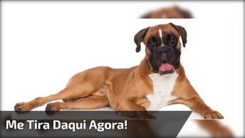 Cachorro Com Nojo Da Água Da Piscina, Veja Como Ele Fica Com As Patinhas!