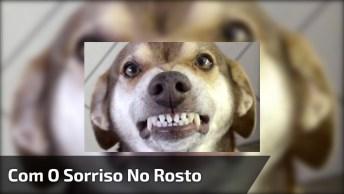 Cachorro Com O Sorriso No Rosto, Quem Aguenta Essa Fofura?
