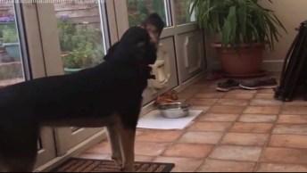 Cachorro Com O Uivo Mais Afinados De Todos Os Tempos, Escute A Afinação!