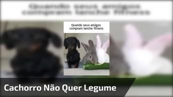 Cachorro Com Olhar Triste Ao Ver Coelhos Comendo Legume!