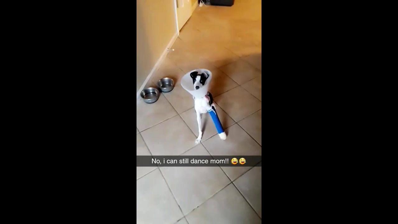 Cachorro com pata enfaixada e cone da vergonha e mesmo assim dançando