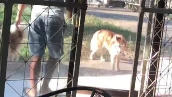 Cachorro Com Preguiça De Acordar, Ele Teve Que Ser Arrastado!
