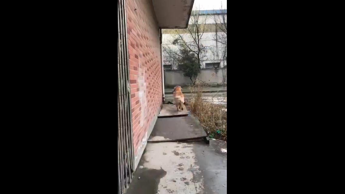 Cachorro com seu dono