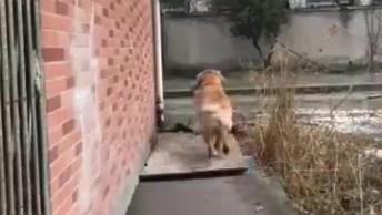 Cachorro Com Seu Dono, Veja Como Ele Esta Constantemente Ajudando Seu Dono!