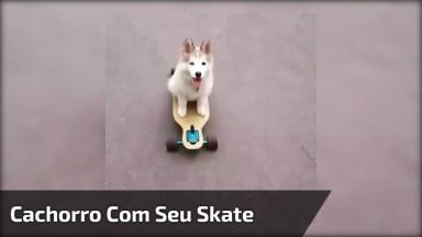 Cachorro Com Seu Skate, Ele Manda Bem Ou Muito Bem? Confira!