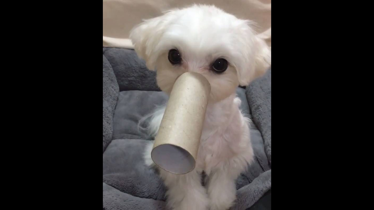 Cachorro com tromba de elefante