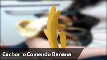 Cachorro Comendo Banana, Que Coisa Mais Fofa De Se Ver, Confira!