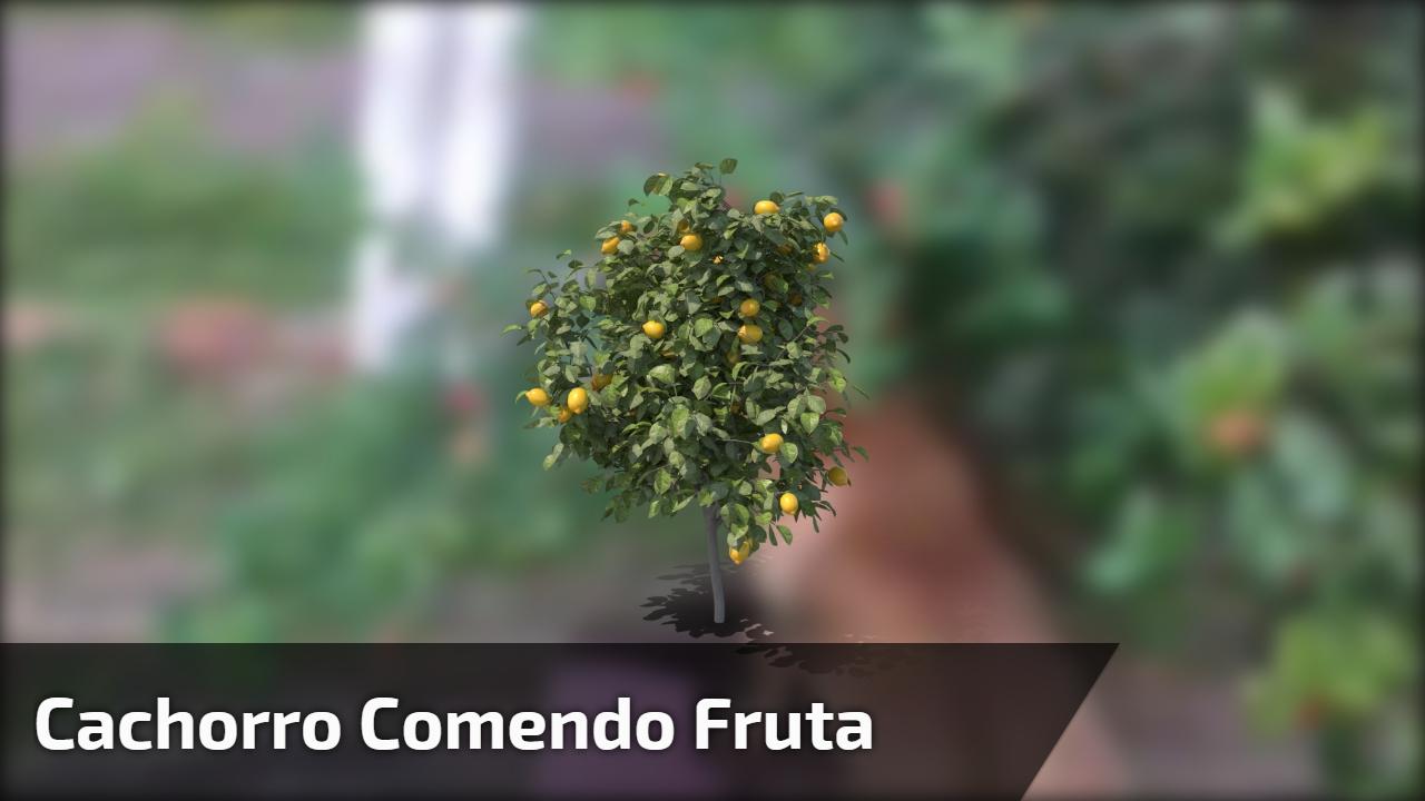 Cachorro comendo fruta