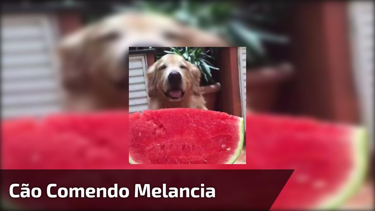 Cão comendo melancia