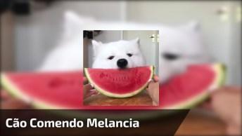 Cachorro Comendo Melancia - Que Delicia De Fruta Mamãe, Tem Mais?