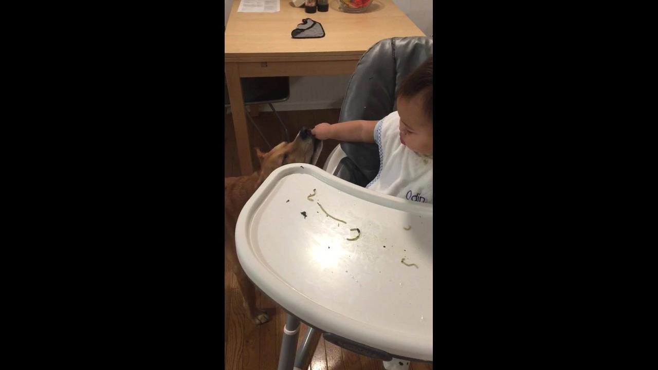 Cachorro comendo verdinho para ajudar o bebê