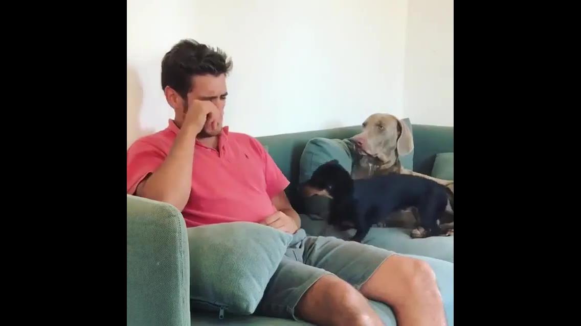 Cachorro consola dono ao ver ele chorando