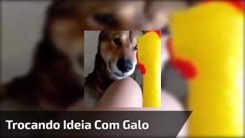 Cachorro Conversando Com Brinquedo De Borracha, Que Fofura!