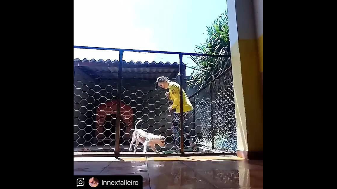 Cachorro correndo atrás do rodo
