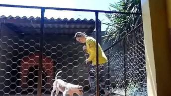 Cachorro Correndo Atrás Do Rodo, Será Que Ele Pensa Que Está Ajudando?