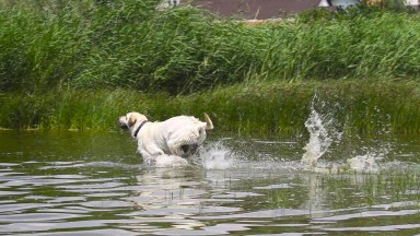 Cachorro Correndo Na Água, Ele Não Está Nem Ai Em Ficar Molhado Hahaha!