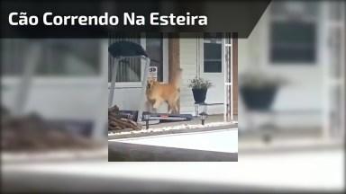 Cachorro Correndo Na Esteira, Até Ele Está Fazendo Exercícios!