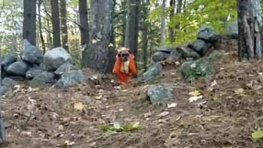 Cachorro Correndo Na Mata Com Fantasia De Desenho Animado, Que Fofinho!