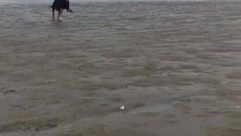 Cachorro Correndo Na Praia, Ele É Uma Figura Incrível, Confira!